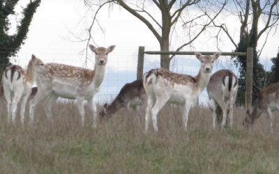 Walk 24 – Denham Castle