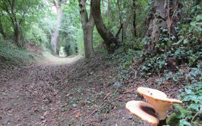 Walk 26 – Hargrave and Chevington