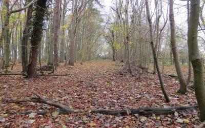 Walk 2 – Wickhambrook including Baxters Green