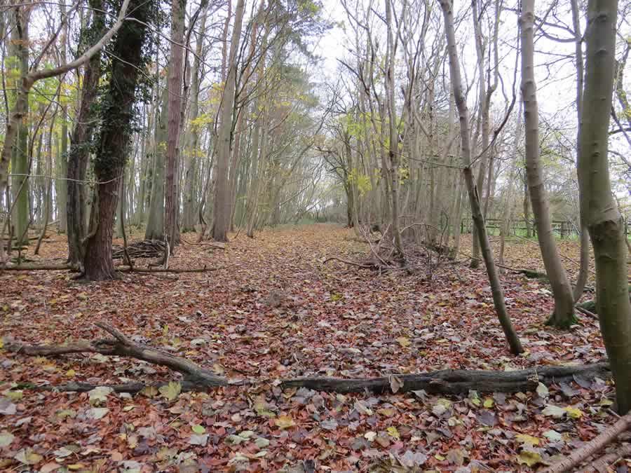 Wickhambrook Walk 2 - spring wood